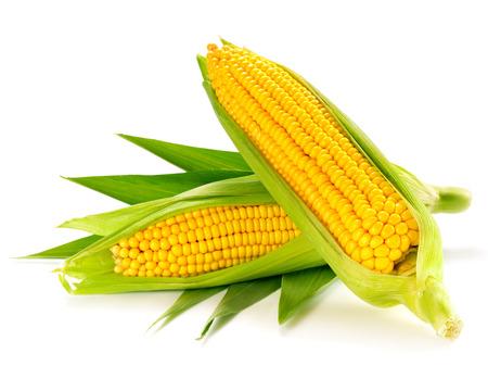 corn isolated photo