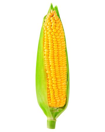 single an ear of corn isolated