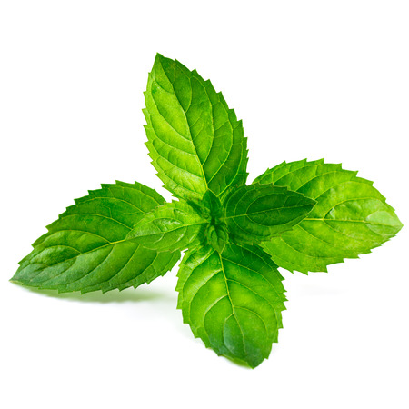 mint leaves: Fresh mint isolated on white background