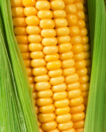 Grains of ripe corn Imagens