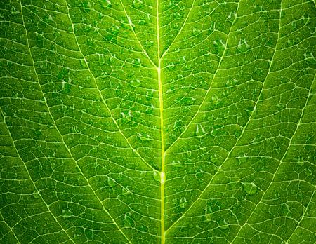 배경으로 녹색 잎의 질감 스톡 콘텐츠