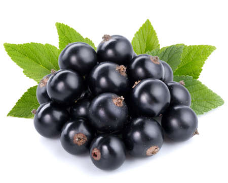 black currant: Black currant with leafs on white Stock Photo