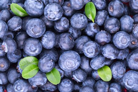 freshly picked: Freshly picked blueberries background