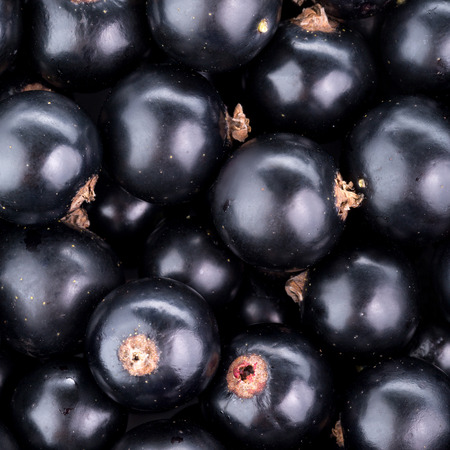 black currant: Black currant background