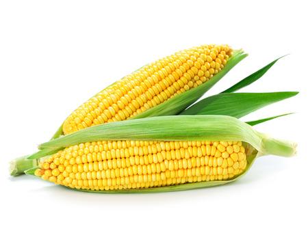 maíz: Una espiga de trigo aislado en un fondo blanco