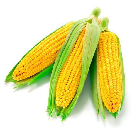 격리 된 옥수수
