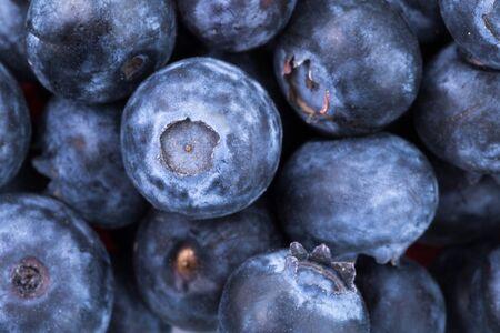 freshly picked: Freshly picked blueberries background