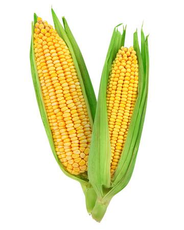 Maïs geïsoleerd op een witte achtergrond Stockfoto - 36775832