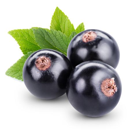 Schwarze Johannisbeere Beeren isoliert auf wei�em Lizenzfreie Bilder