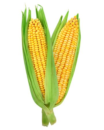 cob: Corn on the cob kernels isolated