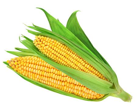 corn kernel: Corn on the cob kernels isolated