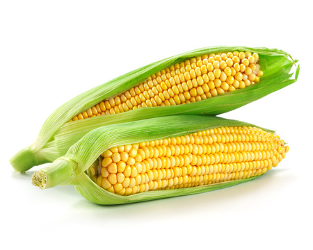 corn: An ear of corn isolated on a white background