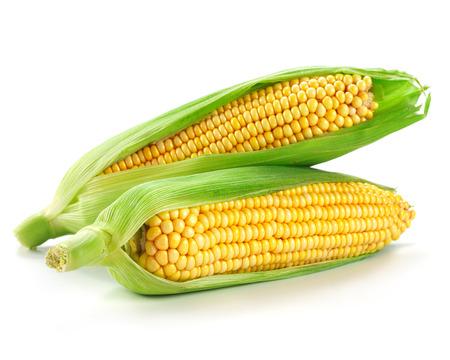 elote: Una espiga de trigo aislado en un fondo blanco