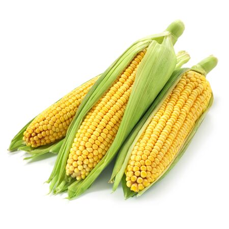 Corn on the cob kernels isolated
