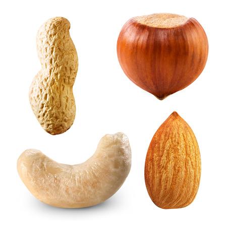 albero nocciolo: Raccolta nocciole mandorle anacardi arachidi isolato
