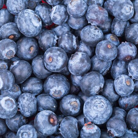 freshly picked: Tasty freshly picked blueberries background