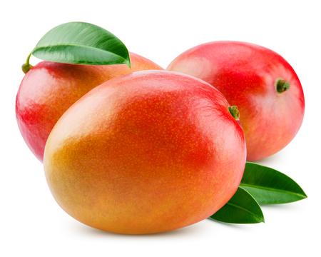 mango: fresh mango isolated on white + Clipping Path Zdjęcie Seryjne