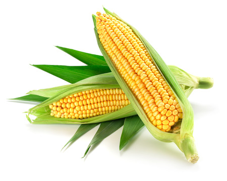 Corn on the cob kernels close up shot Stock Photo