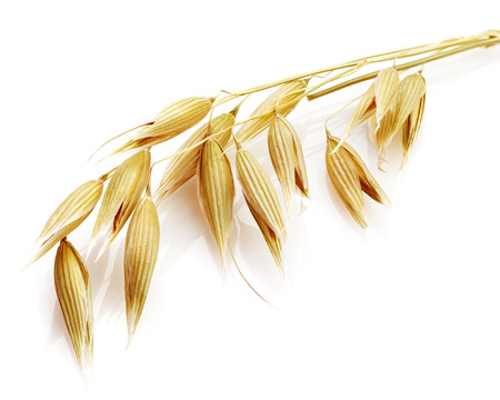 Haver korrel graan op wit wordt geïsoleerd Stockfoto - 42439048