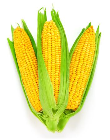 the ears of corn: Corn on the cob kernels close up shot Stock Photo