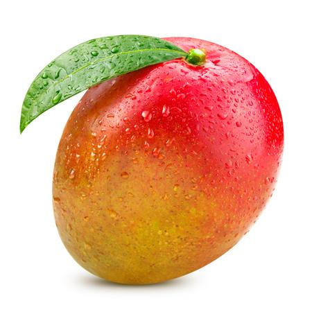 fruta tropical: Mangos maduros aislados en blanco Trazado de recorte Foto de archivo
