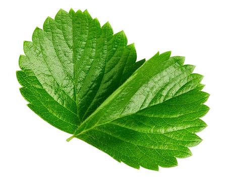 white isolated: strawberry leaf isolated on white