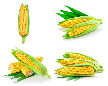 Corn collection isolated