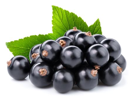 Zwarte bessen tak Stockfoto