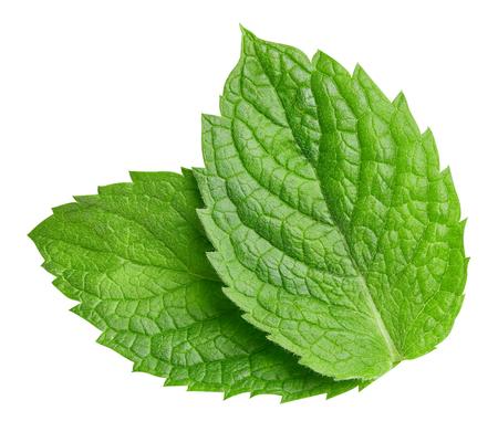 foglie di menta isolate