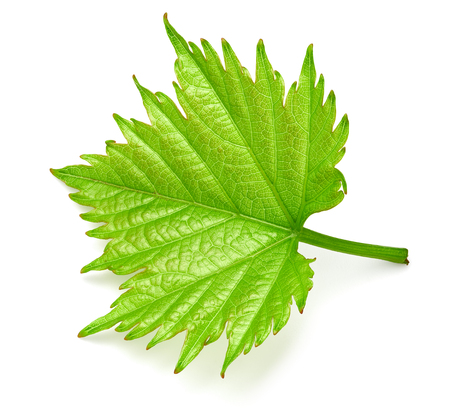 Grape leaf isolated on white Stockfoto