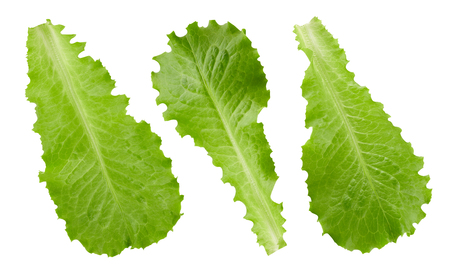 lettuce leaves isolated on white Stock Photo