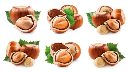 Hazelnuts isolated on white Standard-Bild - 128852574
