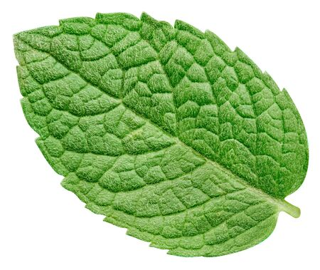 Mint leaf isolated on white background. 스톡 콘텐츠