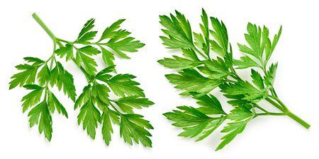Fresh parsley isolated on white 스톡 콘텐츠