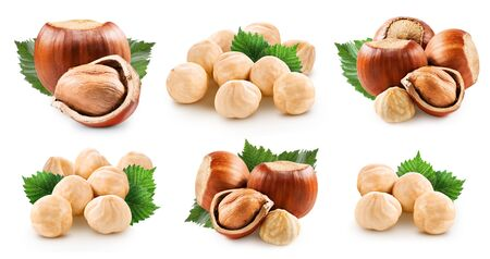 Hazelnuts collection isolated on white background