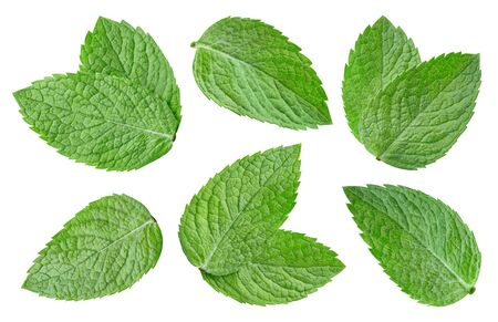 Mint organic leaves collection set. Mint full macro shoot fruit healthy food ingredient on white . suitable for package