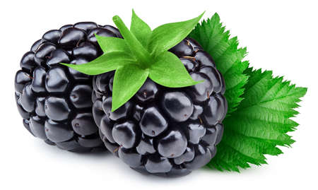 Blackberry berry with leaves isolated on white background.