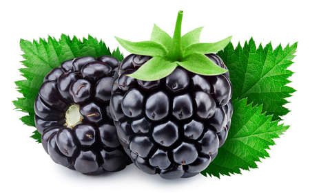 Ripe blackberries on white background. Blackberries decorated with green leaves