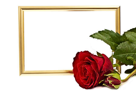 Golden horizantaly staying frame behind of red lying rose on the white background