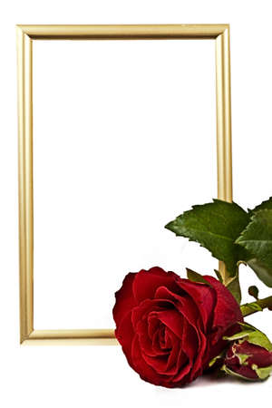 Golden verticaly staying frame behind red lying red rose on the white background Stock Photo
