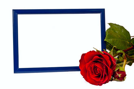 red rose with blue horizontaly standing photo frame on the white background Stock Photo