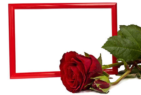 Red rose lying before frame. Both are isolated.