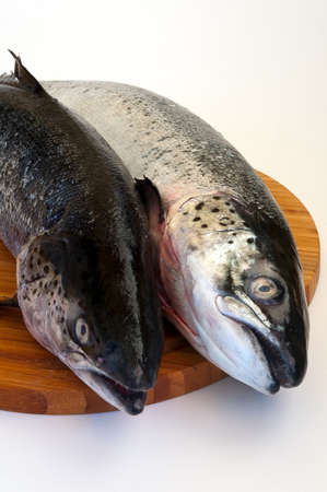 two big trouts fish on the wood board Stock Photo