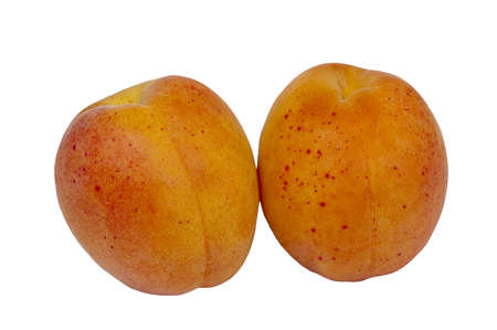 two apricot on white background Stock Photo - 14219957