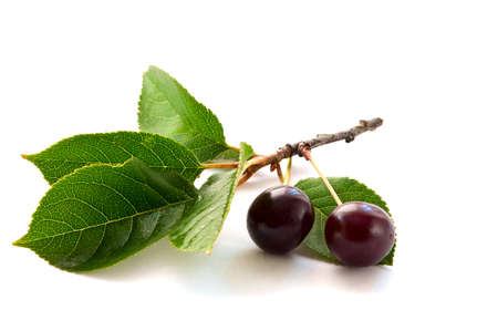 two cherries on a branch Stock Photo