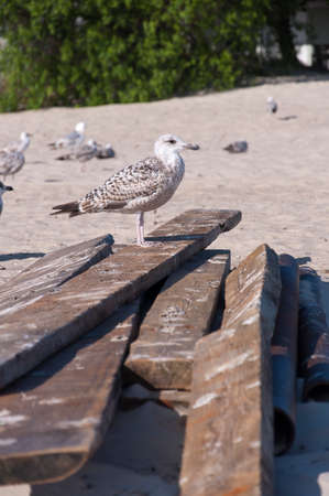 Bird on the wooden boards
