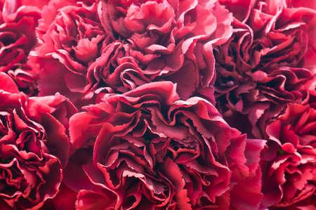 Macro red petals of cloves