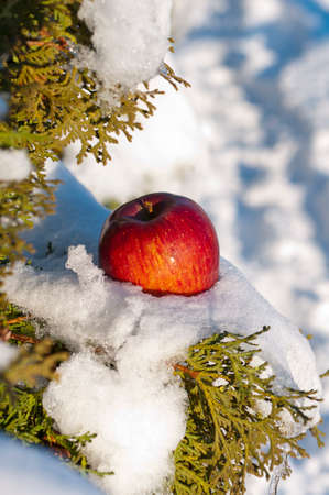 red apple in the snow Stock Photo