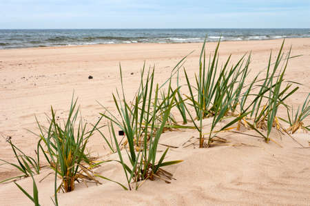 Beach in the Baltic Sea