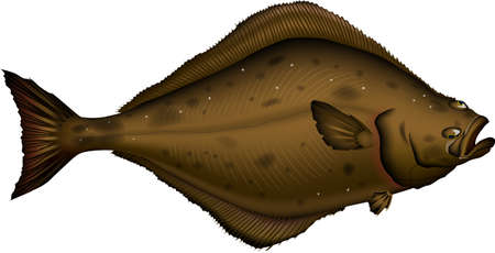 halibut: Halibut Illustration